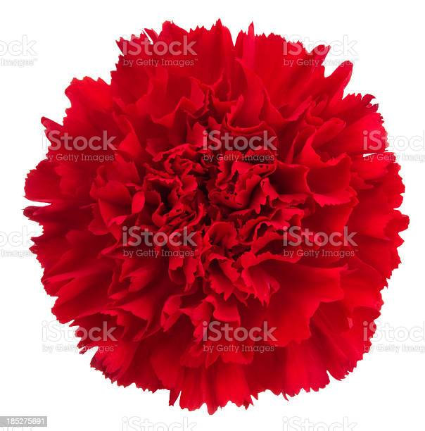 Carnation picture id185275691?b=1&k=6&m=185275691&s=612x612&h=cpip17kfrmlje wolvvxp0poev9ckme14osix4mkuuk=