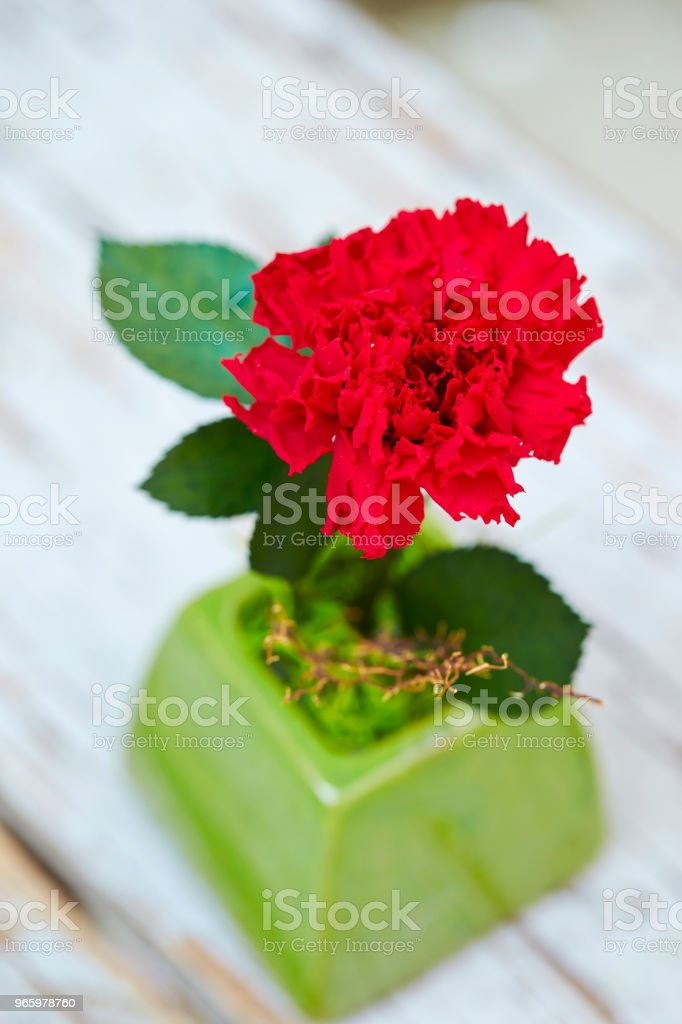Carnation - Royalty-free Beauty Stock Photo