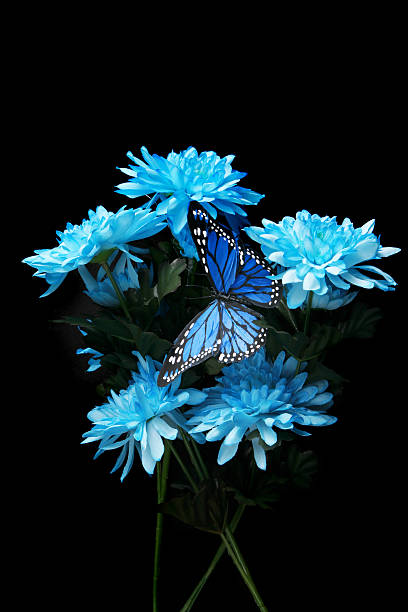 Carnations and a monarch butterfly picture id119597932?b=1&k=6&m=119597932&s=612x612&w=0&h=qhwvpfuihdi9mlrowv9qe8q4iw3avizmutm9w3xgpug=