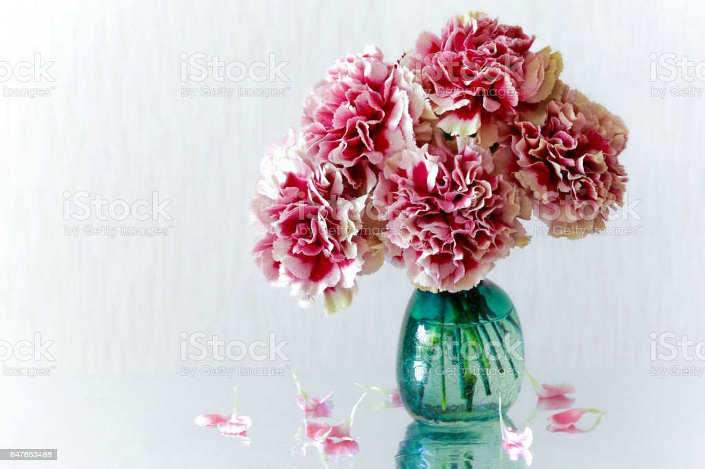 Carnations flower. stock photo