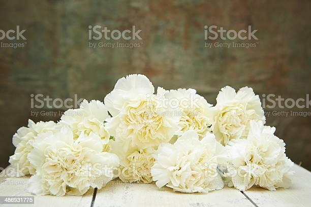 Carnations picture id486931775?b=1&k=6&m=486931775&s=612x612&h=46rb0xymwoajzpdsahiumjutfx9yxavy5gs2nbygo14=