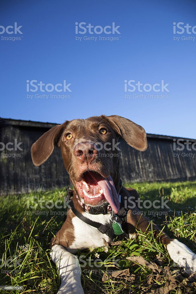 Carnella the Dog royalty-free stock photo