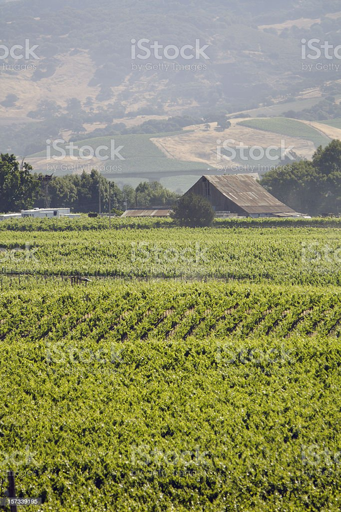 Carneros Valley Summer royalty-free stock photo