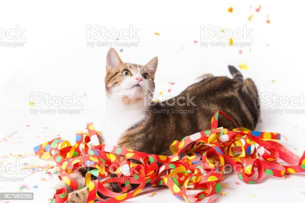 Carnival cat picture id907963250?b=1&k=6&m=907963250&s=612x612&h=ipo5gxoqlgh7ueunewzhjmfqgwgnmh7scqanspt0jhu=