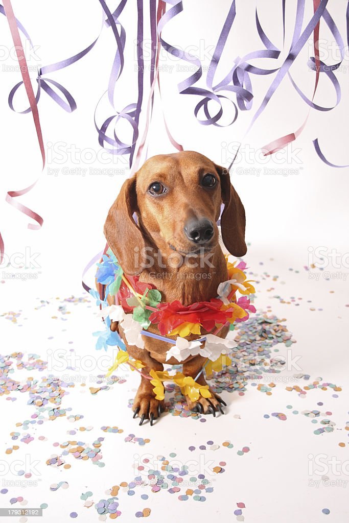 Carnival dachshund stock photo