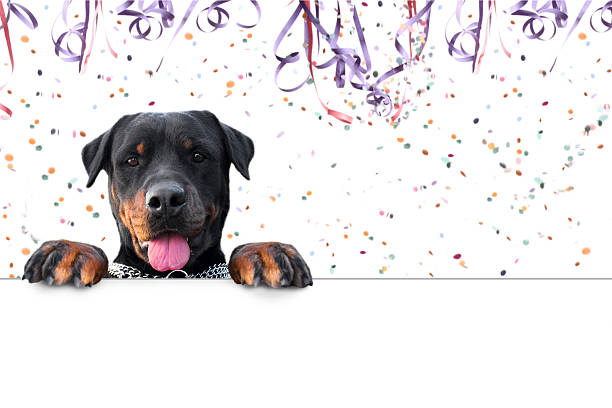 Carnival rottweiler message stock photo