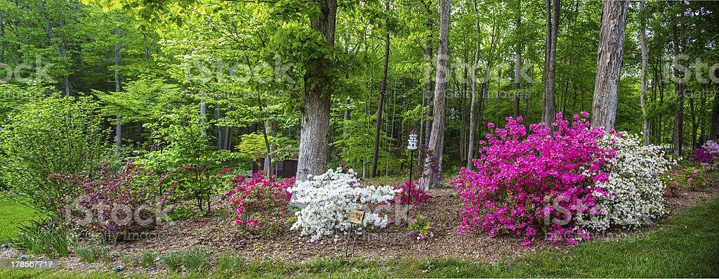 Carolina Garden royalty-free stock photo