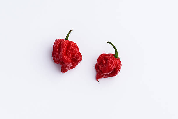 Carolina Reaper Hot Chilli Pepper on white Hot Chilli Carolina Reaper isolated on white south carolina stock pictures, royalty-free photos & images