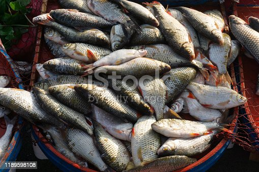 635931692istockphoto carp and various fishes sold in the fish market 1189598108