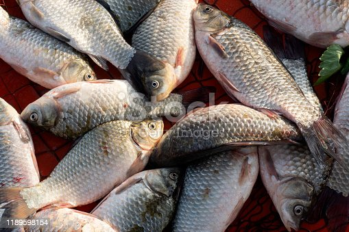 635931692istockphoto carp and various fishes sold in the fish market 1189598154