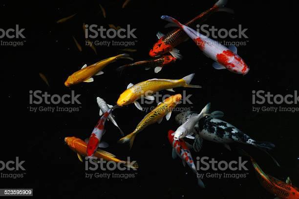 Carp Fish Stock Photo - Download Image Now