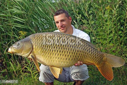 1145410808istockphoto Carp fishing. Catch of fish 1145402712