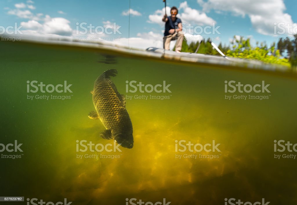 Carp fishing stock photo