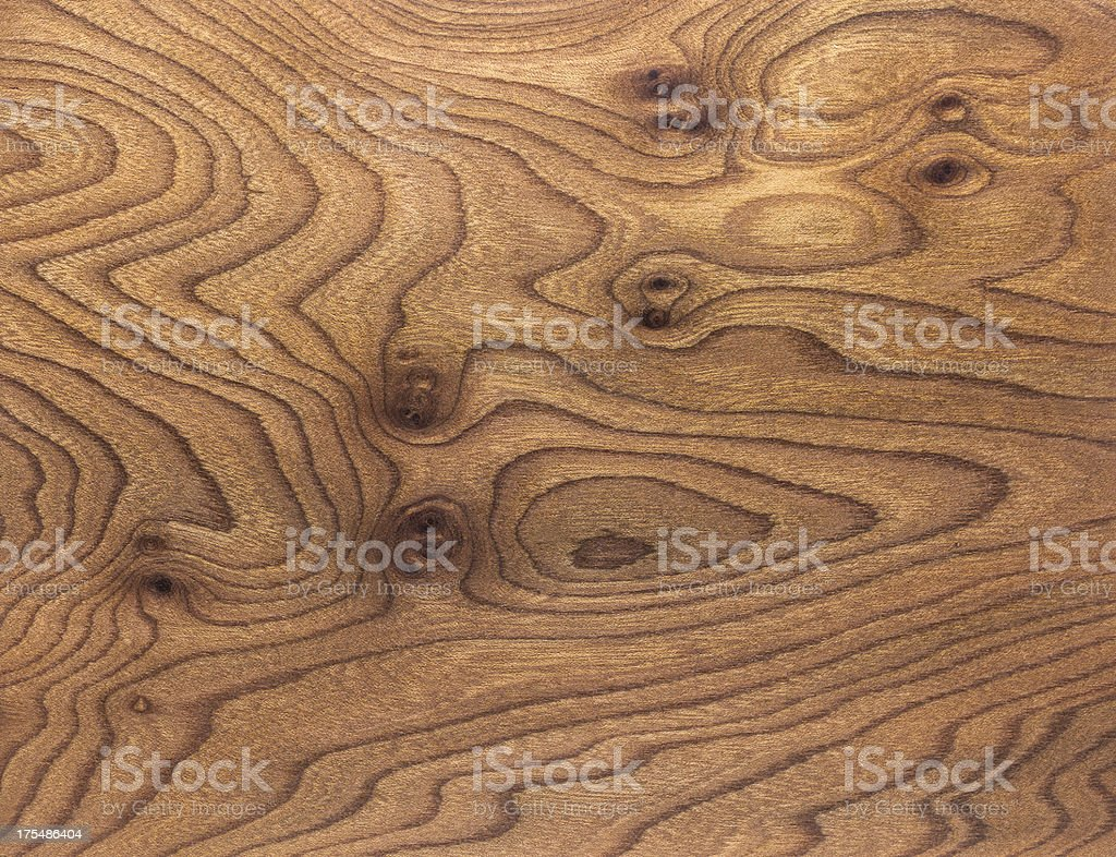 Carpathian Elm Burl Wood Grain Background stock photo