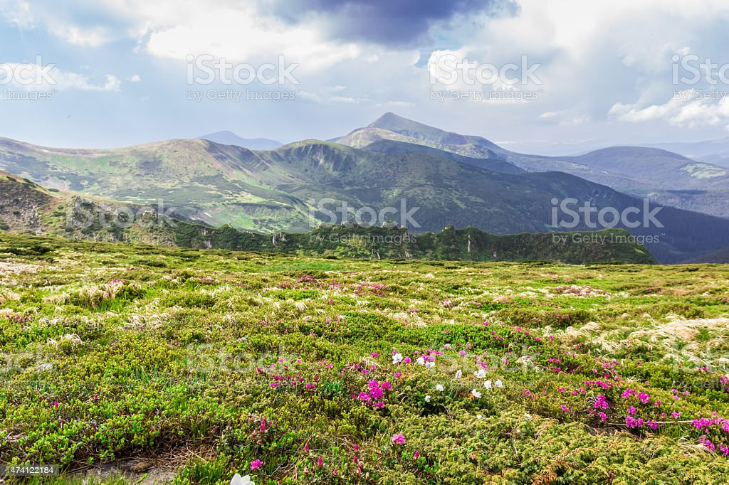Carpathian landscape stock photo