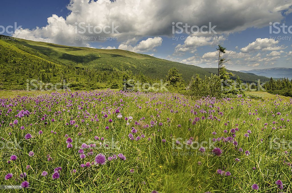 Carpathian Mountains in Ukraine royalty-free stock photo