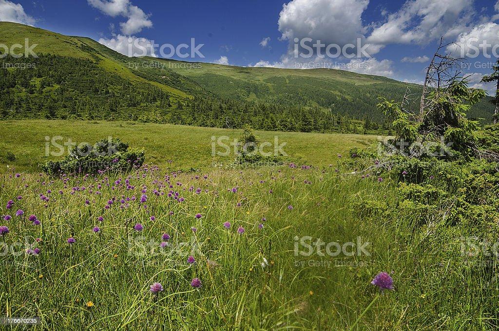 Carpathian Mountains in Ukraine royalty-free stock photo