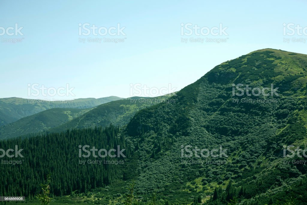 Carpathian mountains with beautiful green dense forest and blue sky, nature landscape. royalty-free stock photo