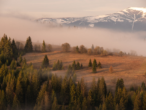 Carpathians in the spring.