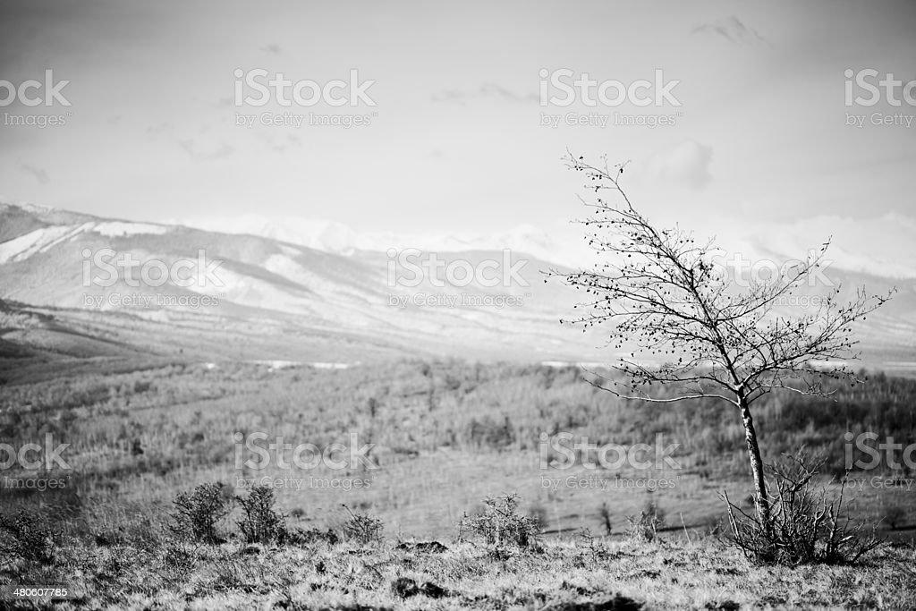 Carpatian Mountains royalty-free stock photo