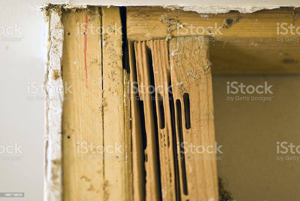 Carpenter Ant Damage stock photo