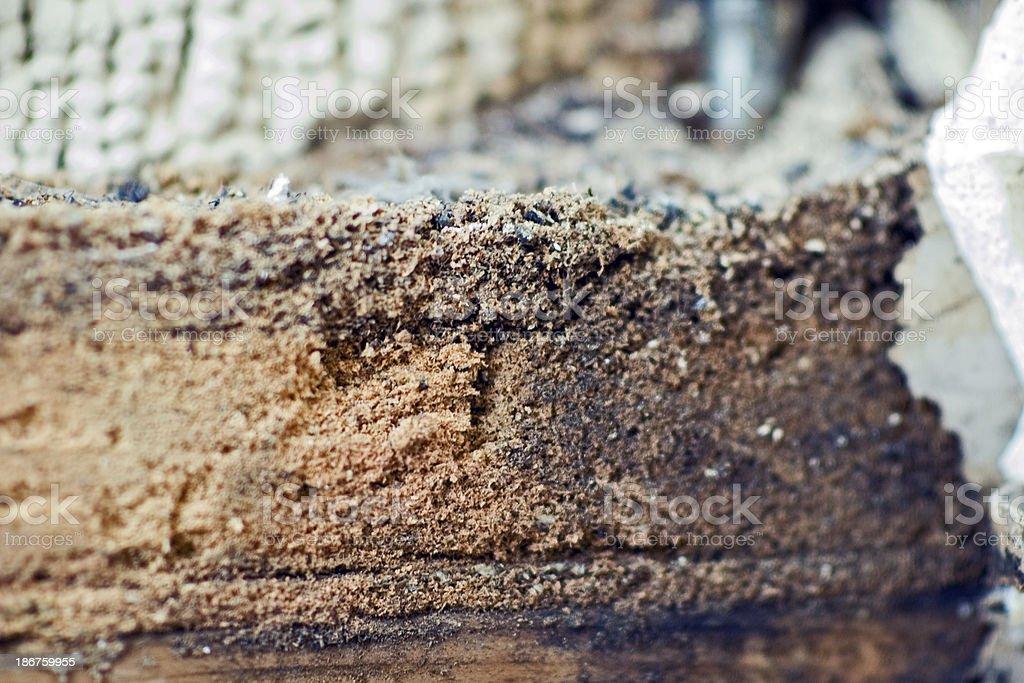 Carpenter Ant 'Sawdust' royalty-free stock photo