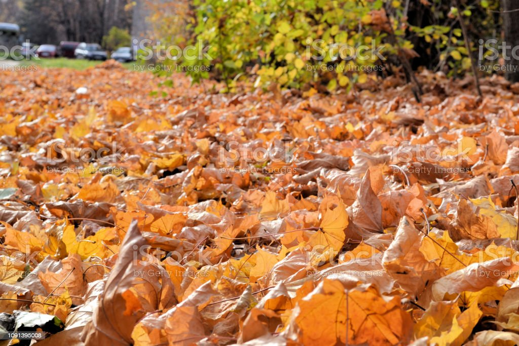 Carpet From Dry Leaves Beautiful Autumn Background Sunny Day
