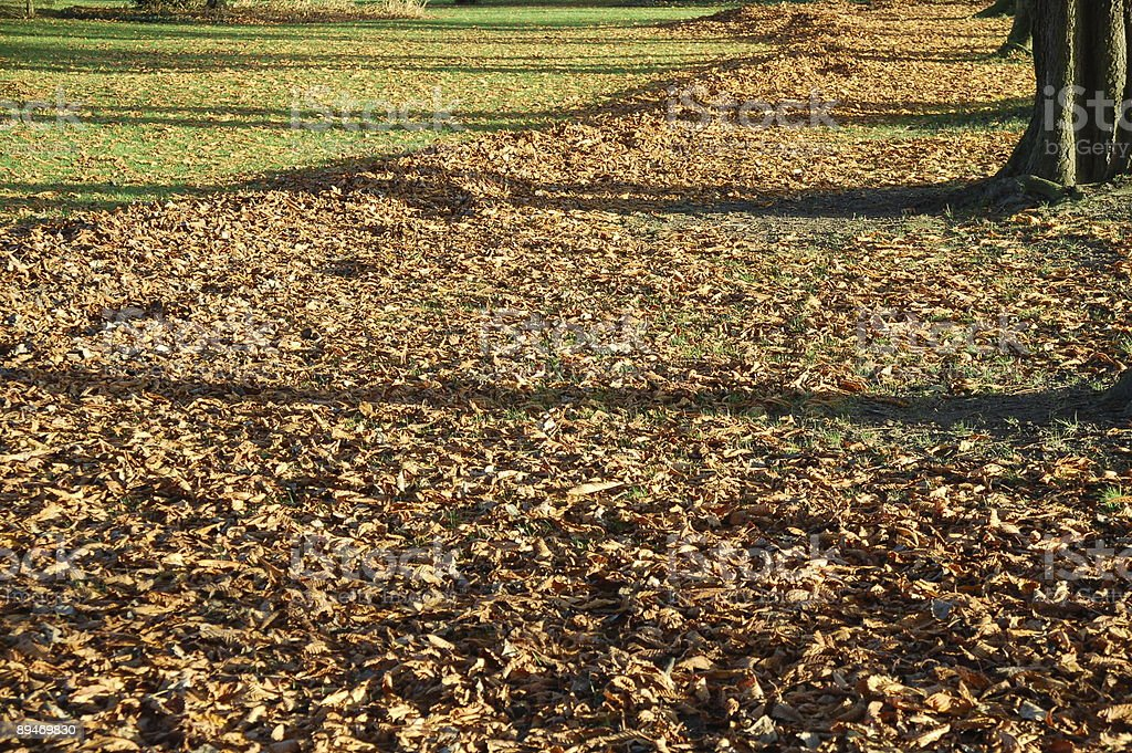 Carpet of Autumnal Leaves royalty-free stock photo