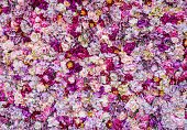 istock Carpet of beautiful flowers 863674518