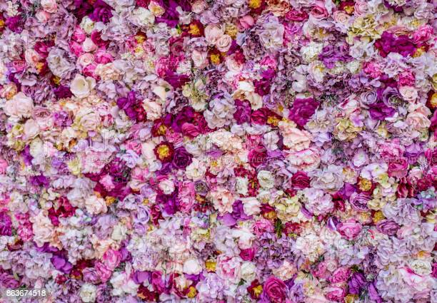 Carpet of beautiful flowers picture id863674518?b=1&k=6&m=863674518&s=612x612&h=waoq3c8urrrtww5juqolejuzz2b64ixdt0deshuejya=