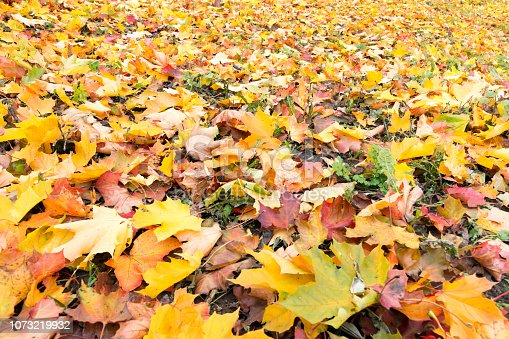 Background: carpet of colorful autumn leaves