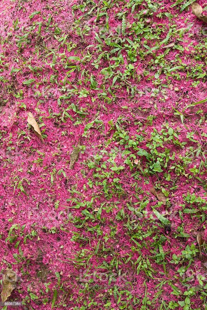 Tappeto di fiori in erba foto stock royalty-free