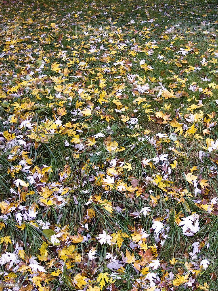 Carpet of leaves royalty-free stock photo