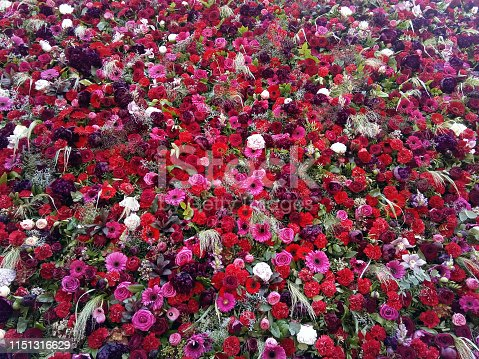 Carpet of red flowers in center of Timisoara
