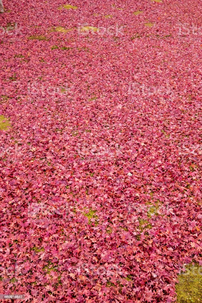 carpet of red leaves royalty-free stock photo