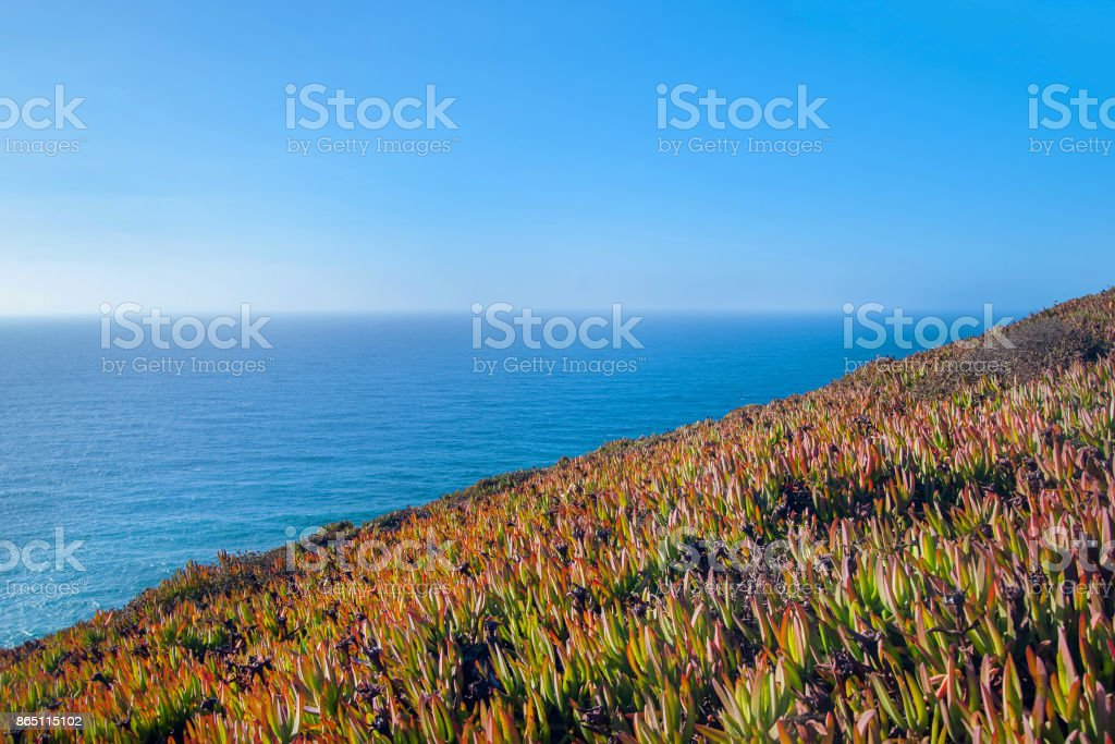 Carpobrotus edulis Hottentot Fig on the Ocean, Cabo Da Roca, Sintra, Portugal stock photo
