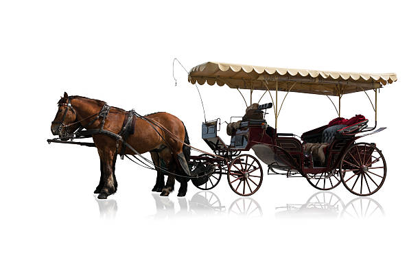 carriage and horses isolated on white - 載客馬車 個照片及圖片檔