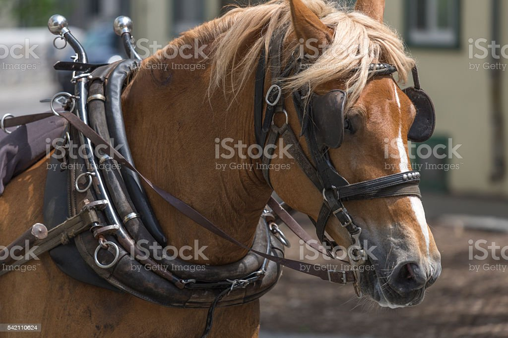 Carriage Horse in Town stock photo