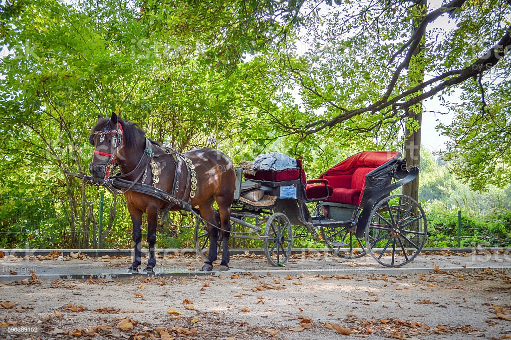 Carriage Horse-drawn vehicle stock photo