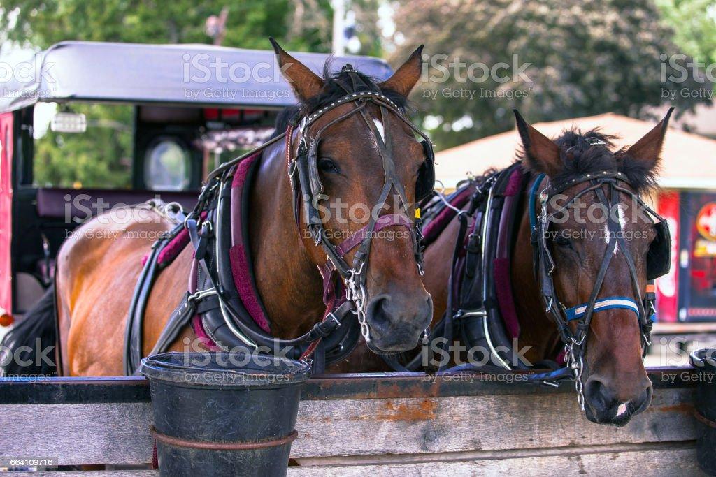 CArriage horses stock photo