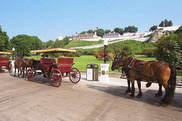 carriages line up - mackinac island stock photos and pictures