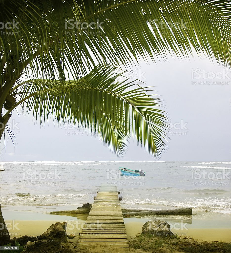 Carribean Palms royalty-free stock photo