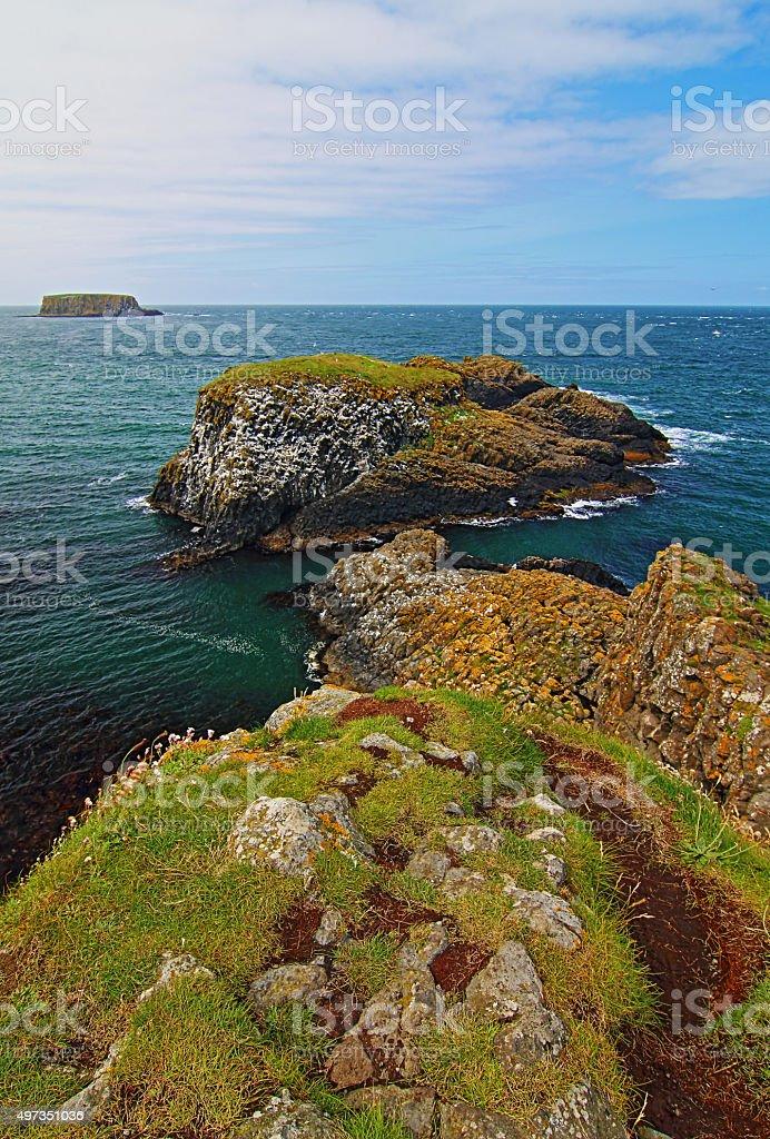Carrick-a-Rede Irish Coastal Island bird nests stock photo