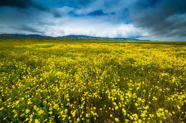 Die Wildblumen der Carrizo Plain – Foto