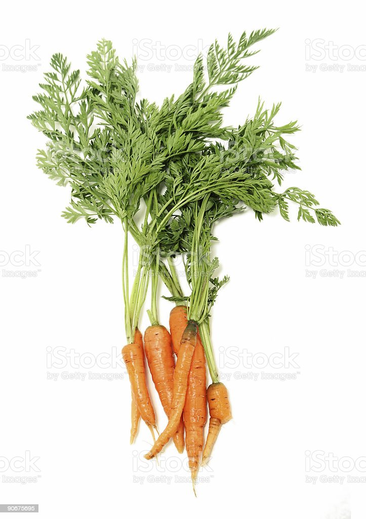 Carrot Bunch royalty-free stock photo