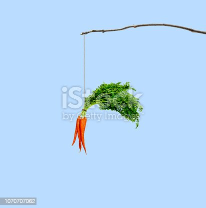 A bunch of carrots dangling from a stick isolated on a blue background.