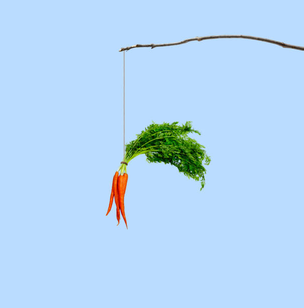 carrot dangling from a stick - agitare una carota davanti a qualcuno foto e immagini stock