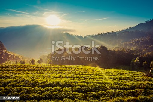 istock Carrot Field In The Mountains Under Beautiful Sunrise 900629836