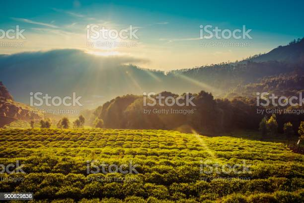 Photo of Carrot Field In The Mountains Under Beautiful Sunrise
