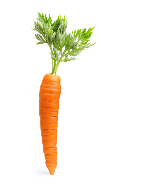 carrot isolated on white - cenoura imagens e fotografias de stock